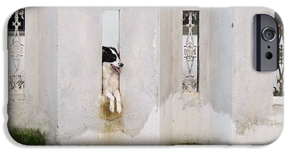 Black Tapestries - Textiles iPhone Cases - Dog Watching iPhone Case by James Hennis