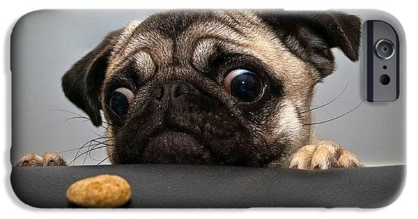 Dog Glass iPhone Cases - Dog iPhone Case by Wish Master