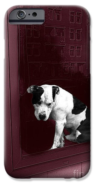 Muscular Digital iPhone Cases - Doggie in the Window Pop Art iPhone Case by John Rizzuto