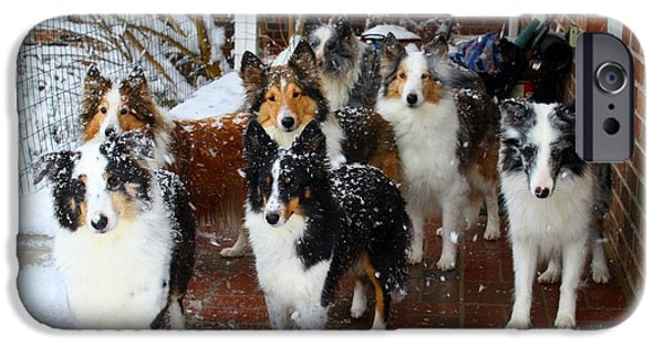 Dogs iPhone Cases - Dogs During Snowmageddon iPhone Case by Kathryn Meyer