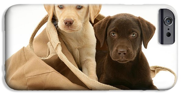 Chocolate Lab iPhone Cases - Dogs In Cloth Bag iPhone Case by Jane Burton