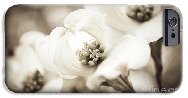 Nature Abstract iPhone Cases - Dogwood Trio iPhone Case by Danny Pugh