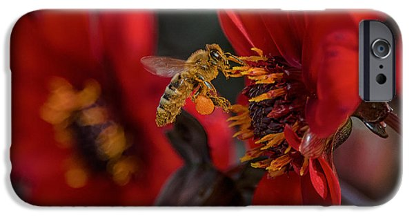 Bee iPhone Cases - Doing His Bees-ness iPhone Case by Bill Roberts