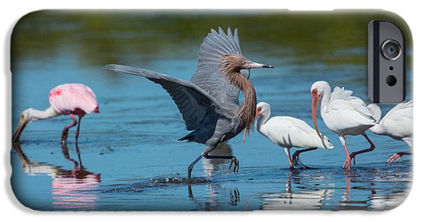 J N Ding Darling National Wildlife Refuge iPhone Cases - Doing the Quick Step iPhone Case by Robert Panozzo