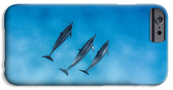 Recently Sold -  - Sea iPhone Cases - Dolphin Trio iPhone Case by Sean Davey