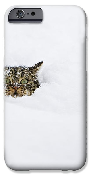 Domestic Cat Felis Catus In Deep Snow iPhone Case by Konrad Wothe