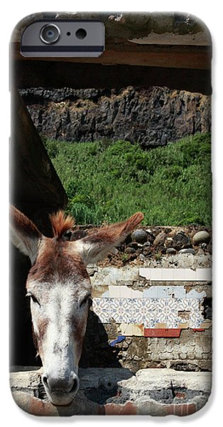 Recently Sold -  - Strange iPhone Cases - Donkey at the window iPhone Case by Gaspar Avila