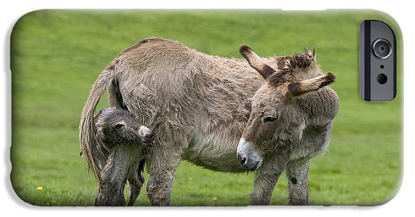 Bonding iPhone Cases - Donkey Mother And Young iPhone Case by Jean-Louis Klein & Marie-Luce Hubert