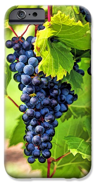 Blue Grapes iPhone Cases - Door County Grape Cluster iPhone Case by Christopher Arndt