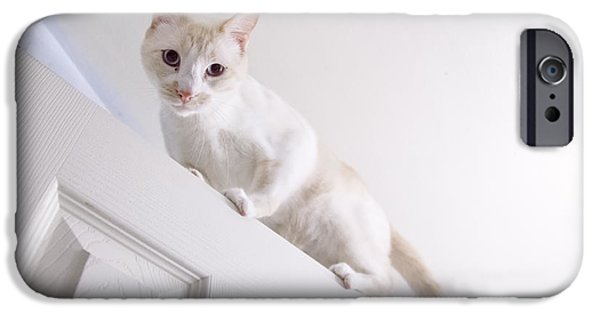 Flame Point Siamese iPhone Cases - Doortop Adventures iPhone Case by SarahCate Philipson