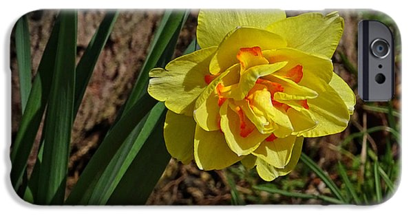 Indiana Springs iPhone Cases - Double Daffodil iPhone Case by Sandy Keeton