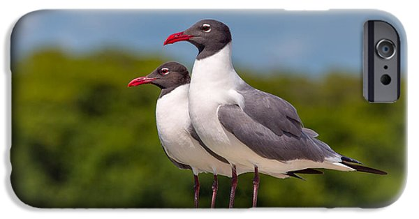 Flying Seagull iPhone Cases - Double Trouble iPhone Case by John Bailey