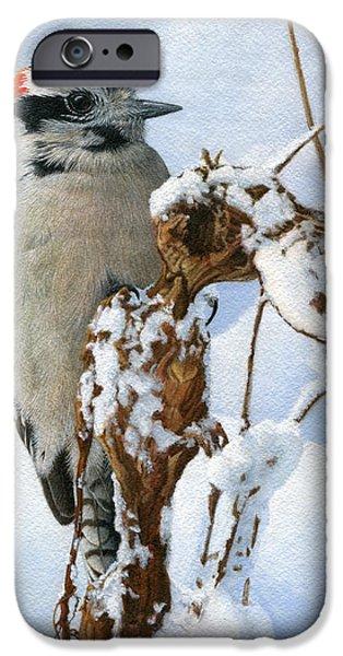 Woodpecker iPhone Cases - Downy Woodpecker  iPhone Case by Ken Everett