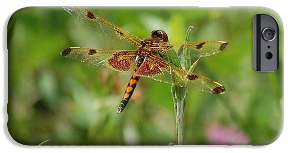 Dragon Fly iPhone Cases - Dragon Flight iPhone Case by David Lane
