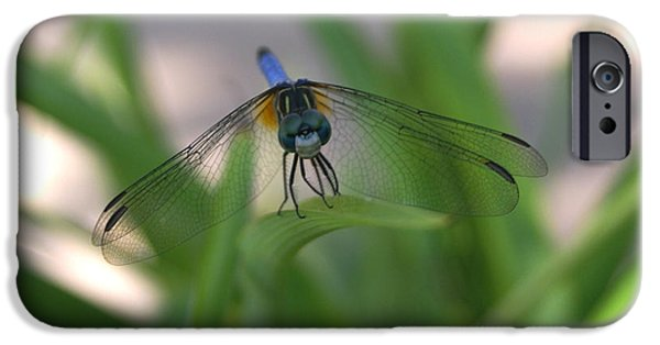 Dragon Greeting Cards iPhone Cases - Dragonfly Wit An Attitude iPhone Case by Debbie May