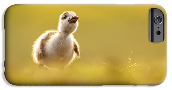 Cute Bird iPhone Cases - Dream Duckie _Egyptian Gosling iPhone Case by Roeselien Raimond