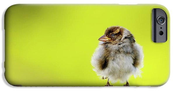 Baby Bird iPhone Cases - Dream Sparrow iPhone Case by Betty LaRue
