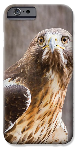 One iPhone Cases - Dreaming of Flight iPhone Case by Dawn Currie