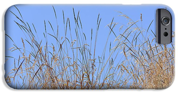Interior Scene iPhone Cases - Dried Grass Blue Sky iPhone Case by Marv Vandehey
