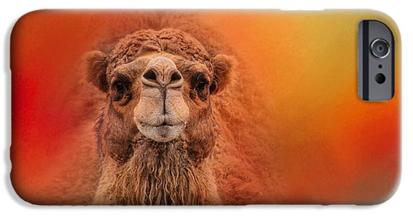 Camel Photographs iPhone Cases - Dromedary Camel iPhone Case by Jai Johnson