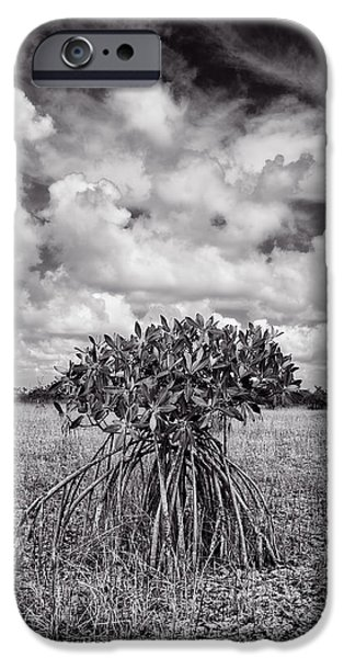 Rhizophora Mangle iPhone Cases - Dry Season Mangrove iPhone Case by Robert Grauer