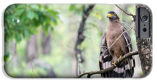 Serpent iPhone Cases - Drying the Wings iPhone Case by Fotosas Photography