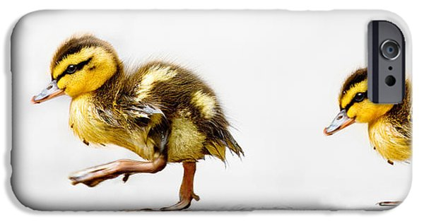 Baby Bird iPhone Cases - Duckling Parade iPhone Case by Lisa Cockrell