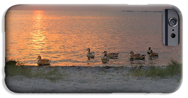 Architecture Tapestries - Textiles iPhone Cases - Ducks at Sunrise iPhone Case by James Hennis