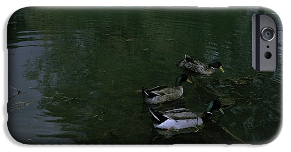 Ledge iPhone Cases - Ducks In a Pond iPhone Case by Rachael Armstead
