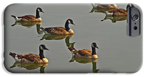 Impressions Of Light iPhone Cases - Ducks in a row iPhone Case by Paul W Faust -  Impressions of Light