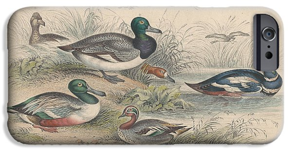 Antiques Drawings iPhone Cases - Ducks iPhone Case by Oliver Goldsmith