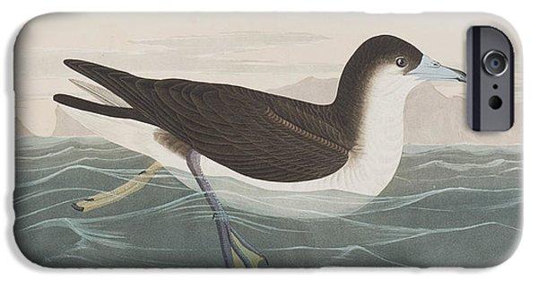 Sea Birds iPhone Cases - Dusky Petrel iPhone Case by John James Audubon