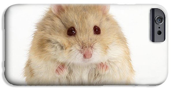 Domesticated Animals iPhone Cases - Dwarf Russian Hamster iPhone Case by Mark Taylor