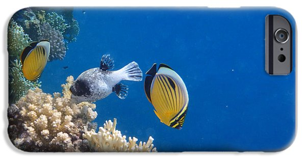 Stripes iPhone Cases - E Butterflyfish and M Pufferfish iPhone Case by Johanna Hurmerinta