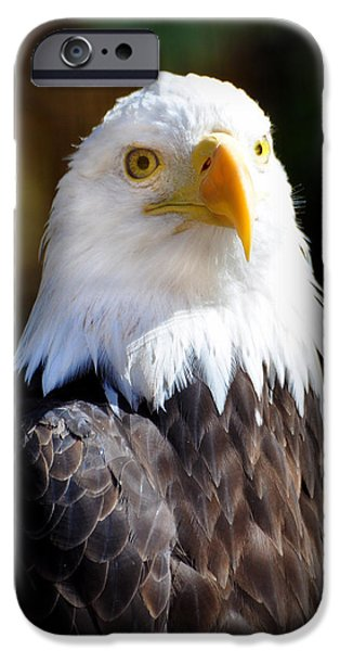Eagle 14 iPhone Case by Marty Koch