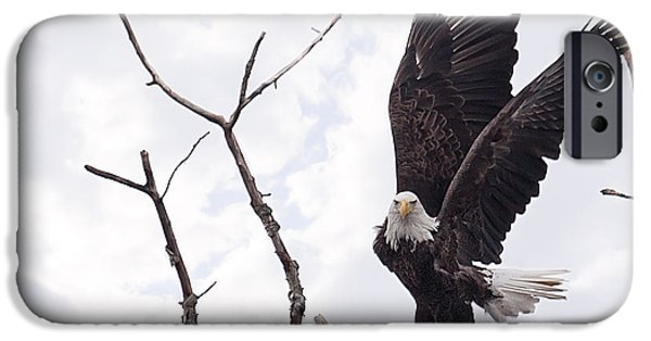 Winter Trees Photographs iPhone Cases - Eagle iPhone Case by Everet Regal