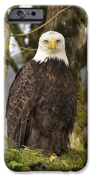 Eagle Eyes iPhone Case by Angie Vogel