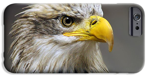 Eagle iPhone Cases - Eagle iPhone Case by Harry Spitz