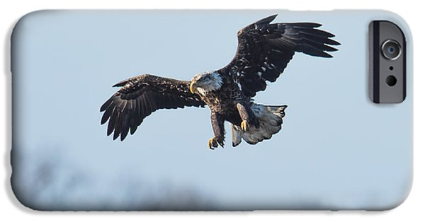 Patriots iPhone Cases - Eagle II iPhone Case by Paul Freidlund