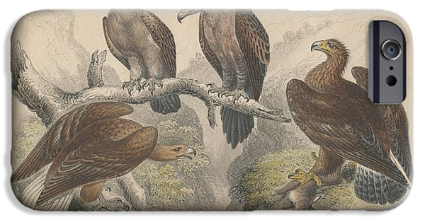 Antiques Drawings iPhone Cases - Eagles iPhone Case by Oliver Goldsmith