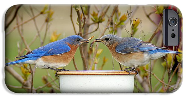 Bluebird iPhone Cases - Early Bird Breakfast for Two iPhone Case by Bill Pevlor