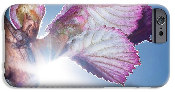 Concord Grapes iPhone Cases - Early Morning Bud Break iPhone Case by Len Romanick
