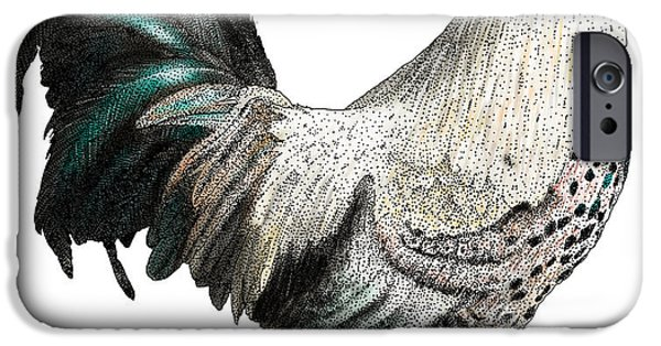 Fauna Drawings iPhone Cases - Easter Egger Chicken iPhone Case by Roger Hall and Photo Researchers