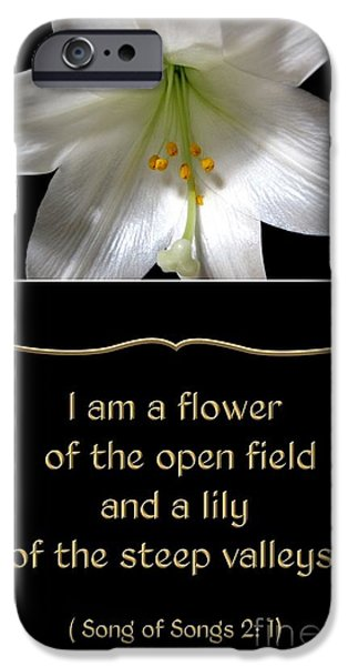 Artists4god iPhone Cases - Easter Lily with Song of Songs quote iPhone Case by Rose Santuci-Sofranko
