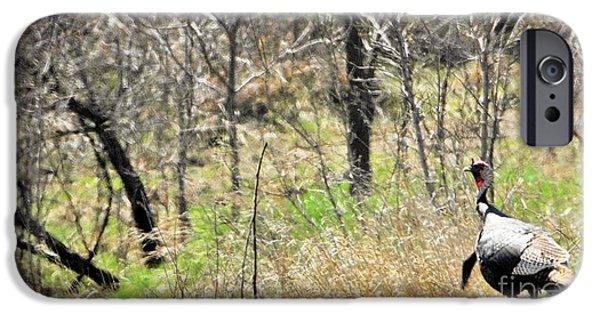 Eastern Wild Turkey iPhone Cases - Eastern Wild Turkey Retreats from Scouting iPhone Case by Rachel Hersh