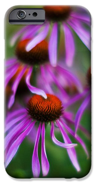 Echinacea iPhone Cases - Echinacea Crowd iPhone Case by Mike Reid