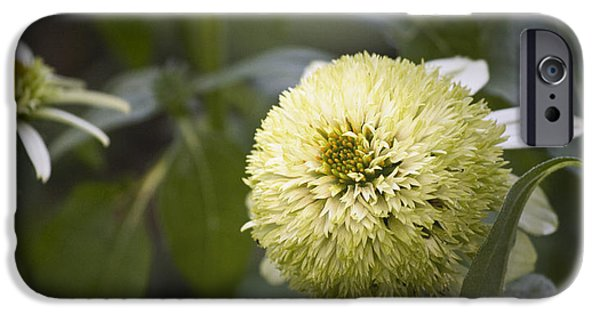 Floral Photographs iPhone Cases - Echinacea Milkshake iPhone Case by Teresa Mucha