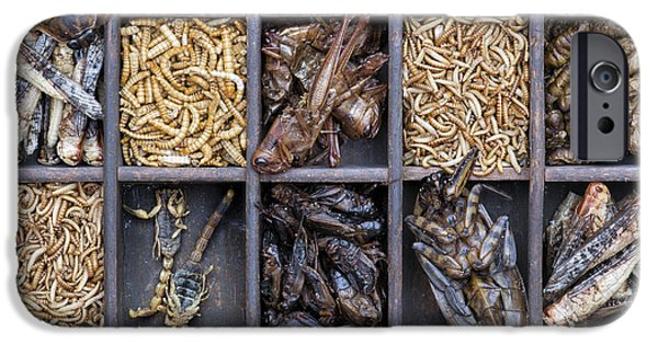 Creepy iPhone Cases - Edible Insects iPhone Case by Tim Gainey