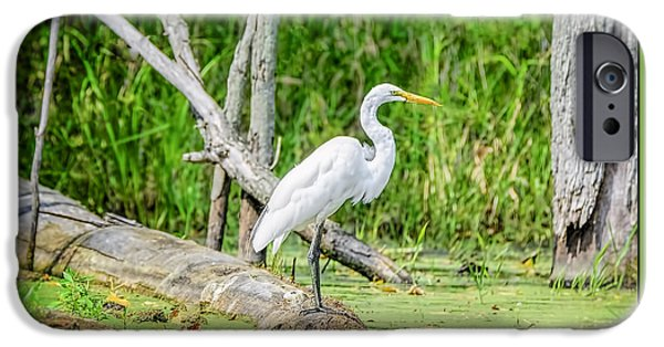 Snowy Day iPhone Cases - Egret at Seven Ponds iPhone Case by LeeAnn McLaneGoetz McLaneGoetzStudioLLCcom