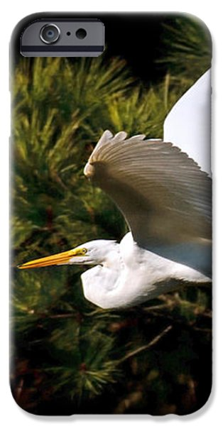 Egret in Flight 1 iPhone Case by Lara Ellis